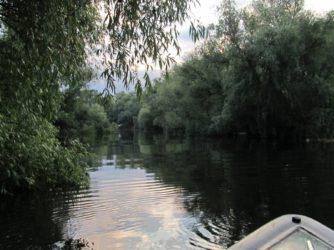 Cu barca in Delta